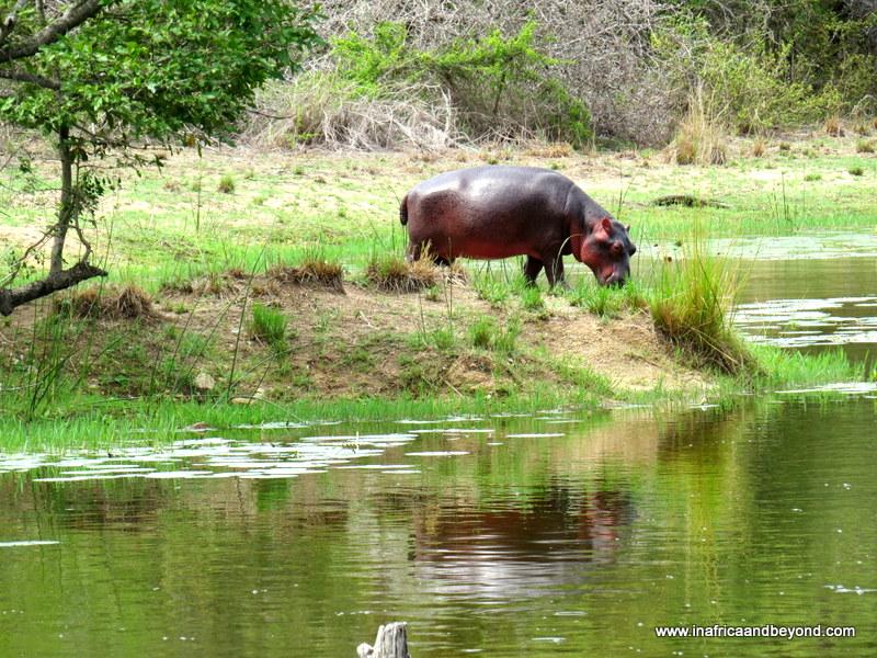 Kruger National Park…After Dark 1