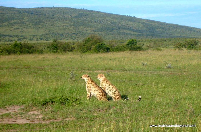 Best things to do in Kenya