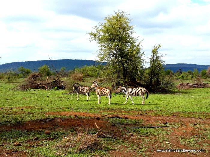 Masai Mara African Country