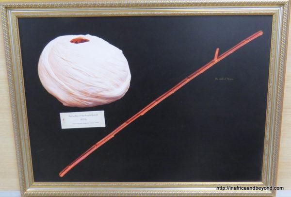 Relics at Topikapi Palace. Joseph turban. Moses Staff