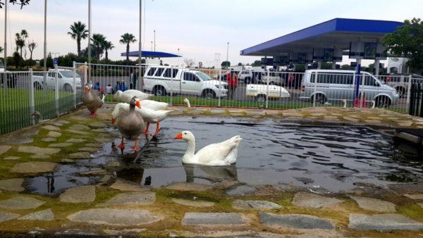 Engen Garage - Bloemfontein