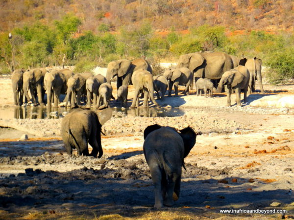 Elephants Madikwe Game Reserve North West