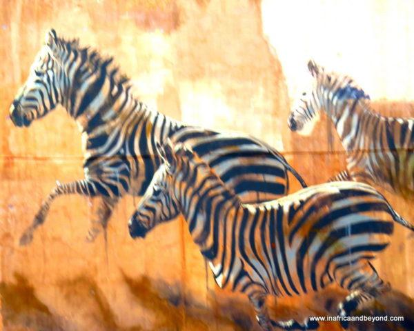 Zebra Graffiti in the CBD