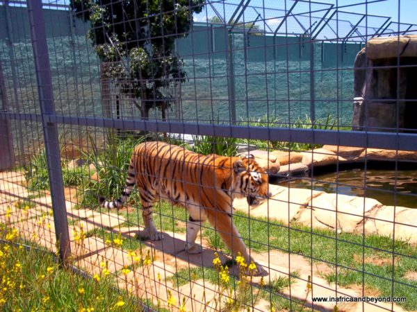 attacks by zoo animals