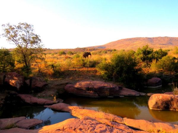 Kwa Maritane Elephant