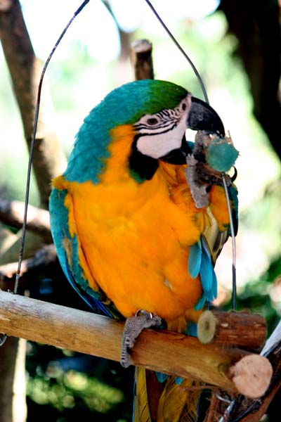 Umgeni River Bird Park - Best things to do in Durban
