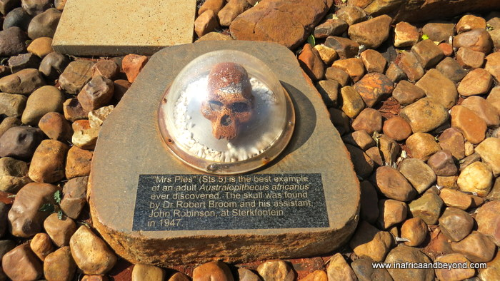 Cradle of Humankind Mrs Ples