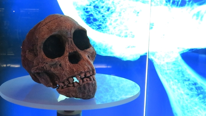 Cradle of Humankind Taung