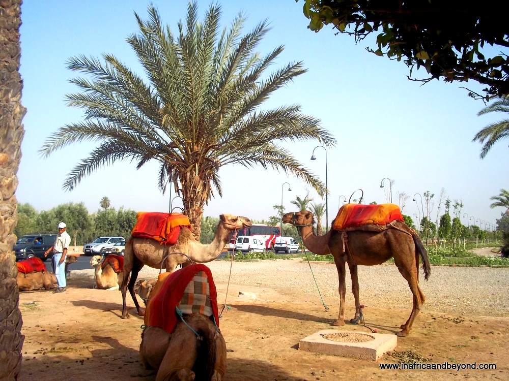 Morocco African Country