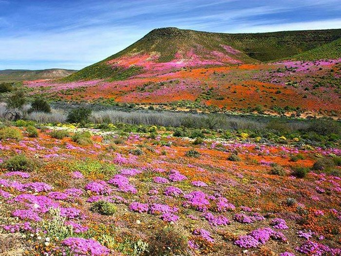 Namaqualand road trip