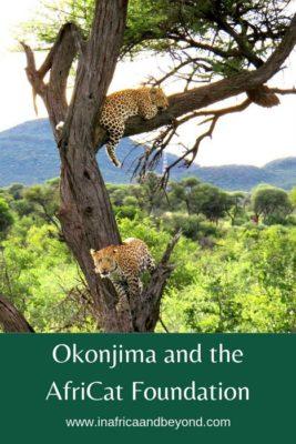 Okonjima and the AfriCat Foundation