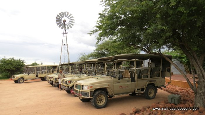 Okonjima AfriCat