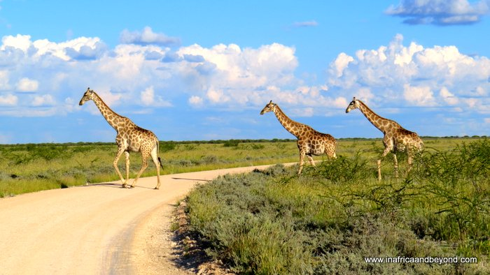 best safari destinations in Africa