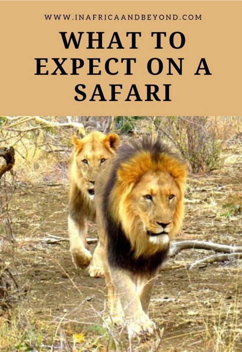 What to expect on a safari