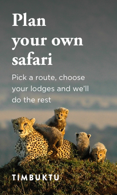 Design a safari
