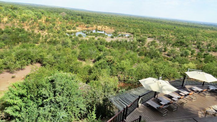 Wildlife & waterfalls at the Victoria Falls Safari Lodge - In Africa and Beyond | Africa travel , Family travel