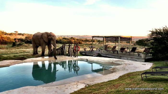 Hlosi Game Lodge Elephant