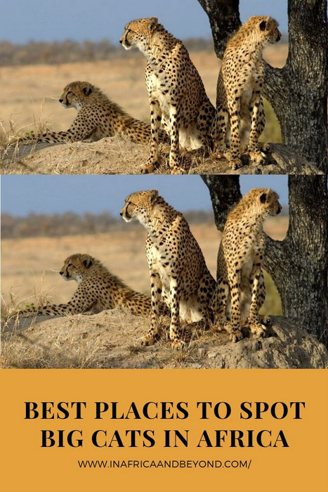 best places to spot big cats in africa