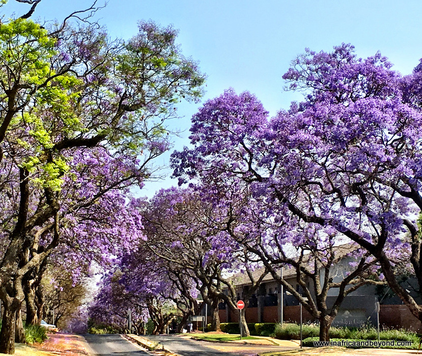 11 Things to do in Pretoria