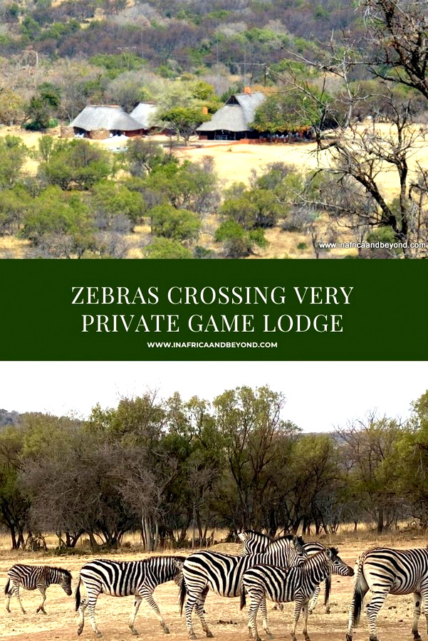 Zebras Crossing Very private game hut