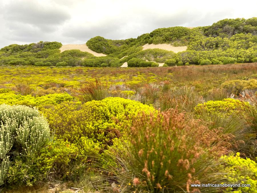 De Hoop Nature Reserve Fynbos