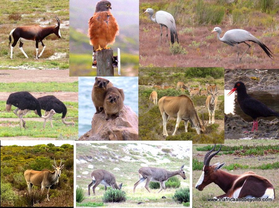 De Hoop Nature Reserve Wildlife and Birds
